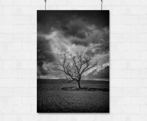 Lone tree and stormy skies-print