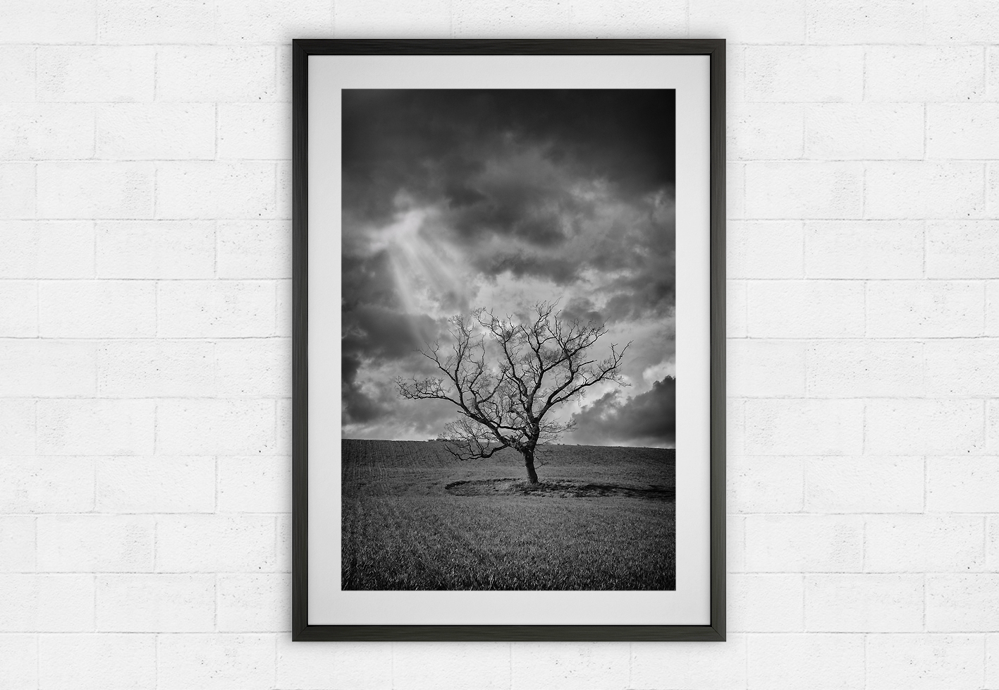 lone tree and stormy skies