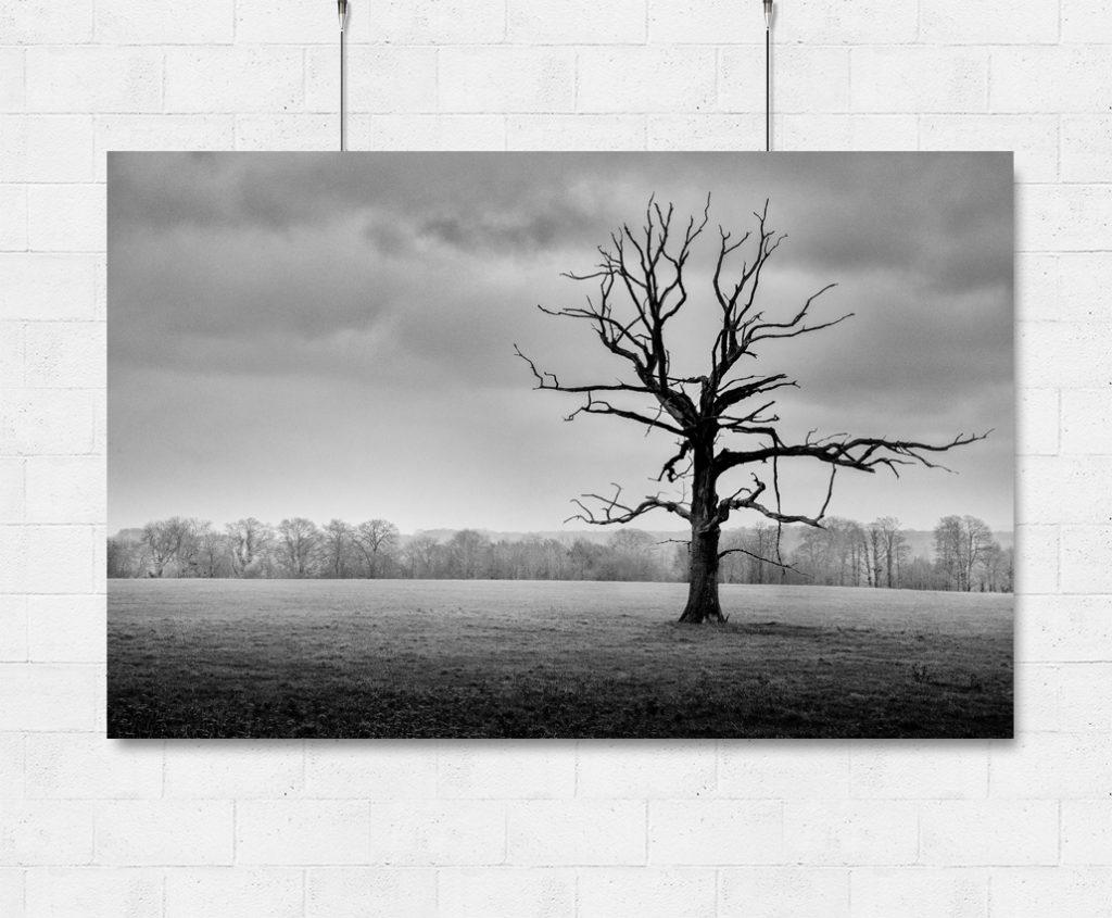 Lonely Tree-print