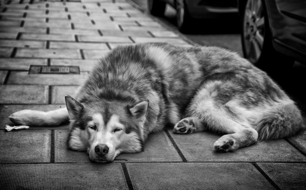 Bristol street dog- portrait